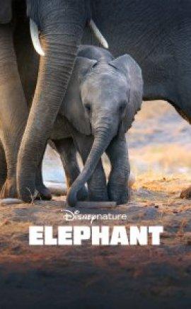 Elephant izle